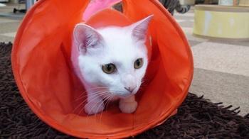 ぷっさん@猫トンネル①