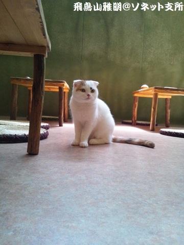 てまりちゃん@てまりのおうち。今回が「てまりのおうち」初訪問 (`・ω・´)ノ~~。最初に撮影したネコちゃんが、まさに、てまりちゃんでした♪